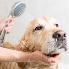 寵物衛生護理